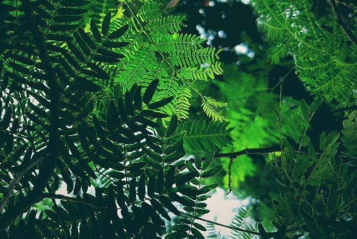 Green leaves hues