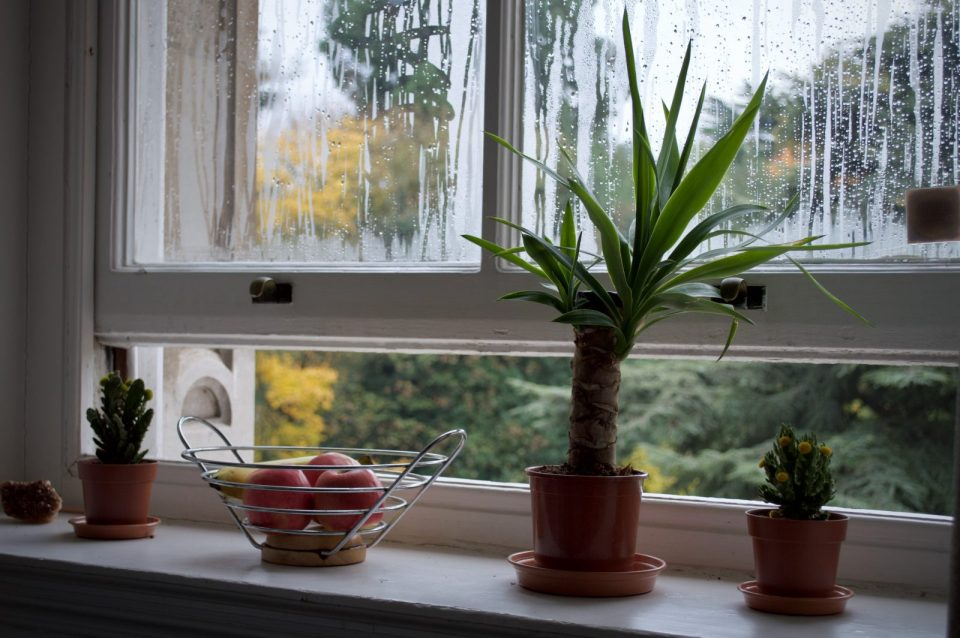 vertical sliding window open with plant pots on the windowsill